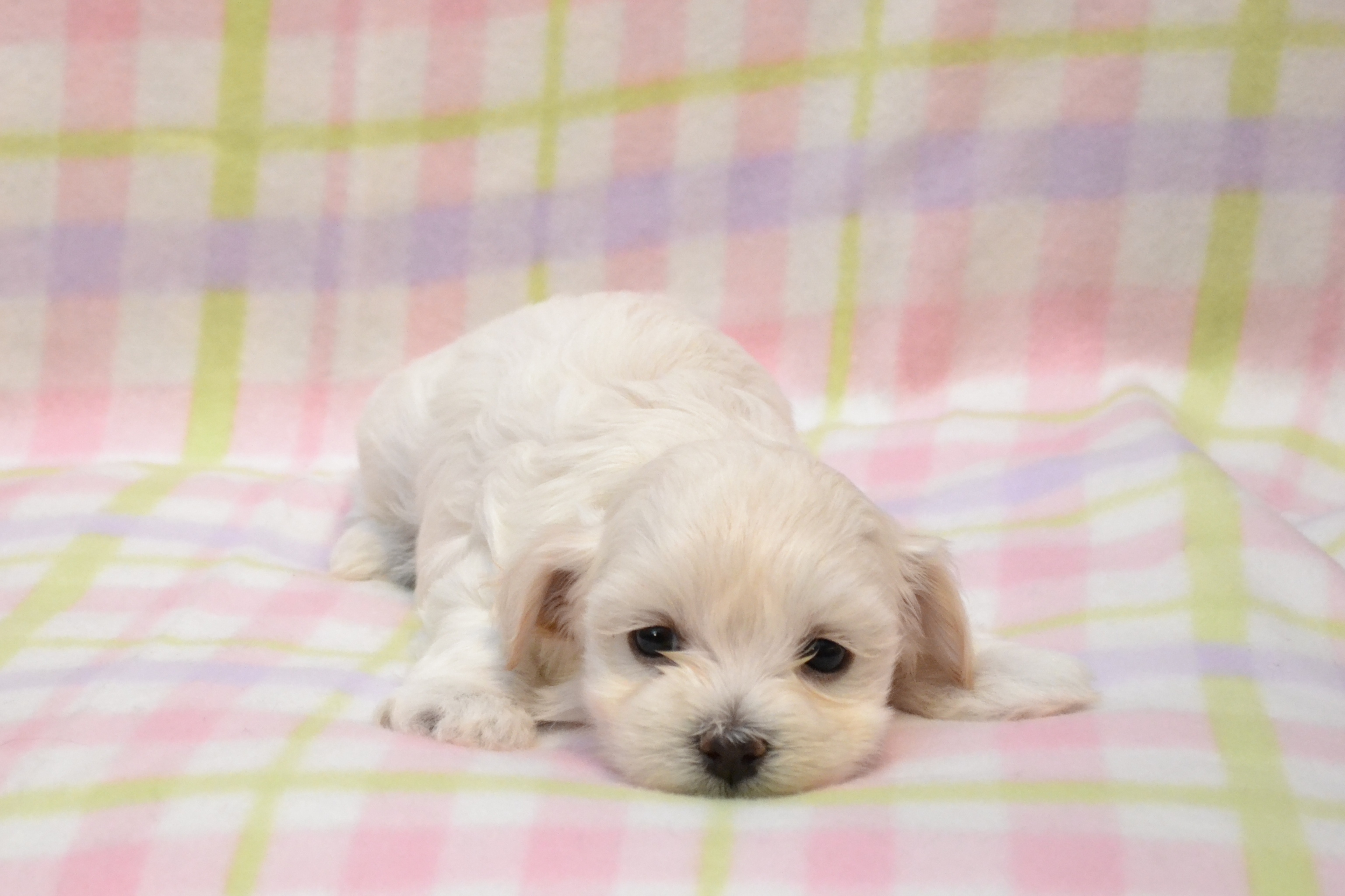 GET READY! Things to know about your new Puppy | Legin's ...
